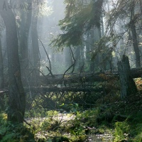 Białowieża Forest – Remarkable Remnant of Europe's Primeval Past; Kuriositas