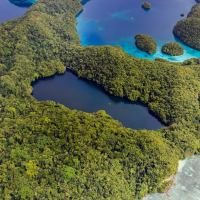Palau's ancient Jellyfish Lake has re-opened to the public; Evening Standard